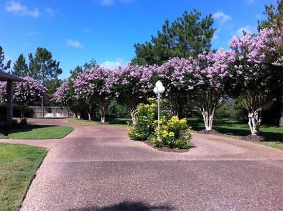 1199 W Main, Bellville, TX - USA (photo 4)