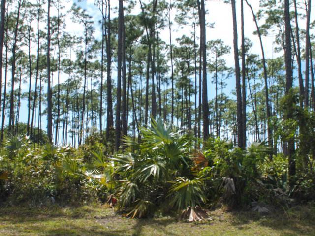 36 Bombard Close, Grand Bahama/freeport - BHS (photo 2)