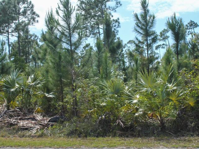 3 Royal Palm Way, Grand Bahama/freeport - BHS (photo 5)