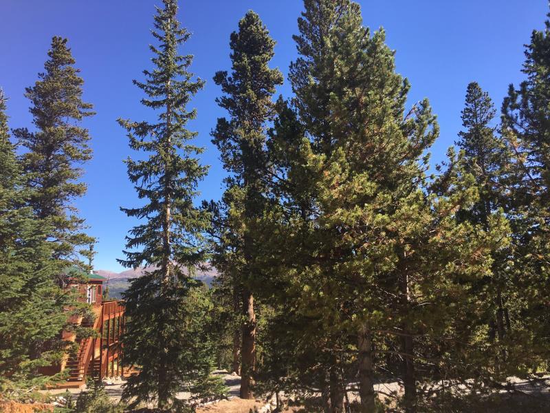 320 Gold Trail Circle, Fairplay, CO - USA (photo 4)