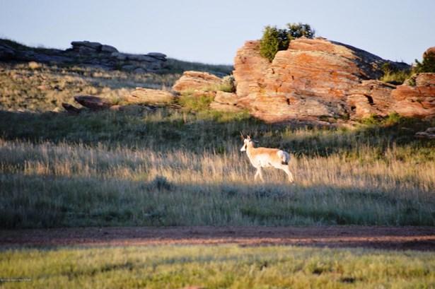Recreation, Farm and Ranch - Laramie, WY (photo 3)