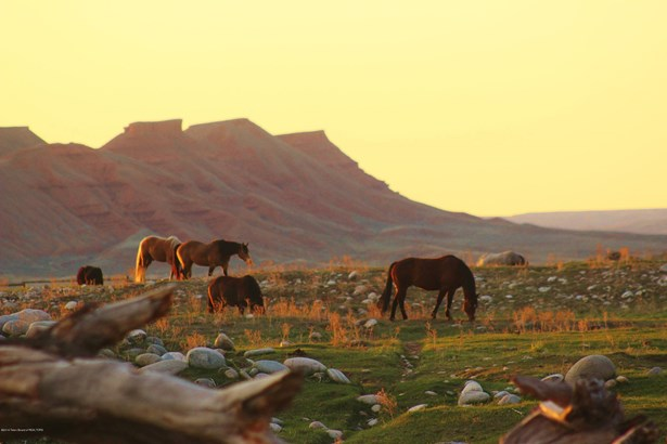 Cattle Ranch, Farm and Ranch - Hyattville, WY