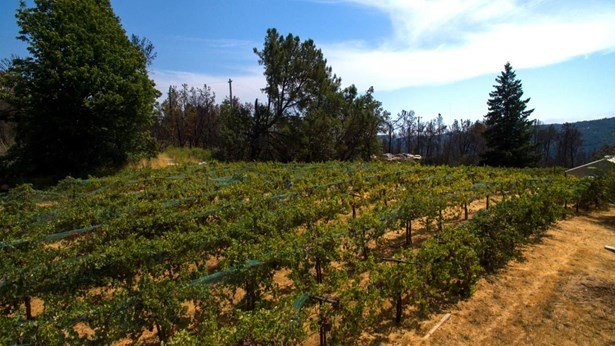 30000 Loma Chiquita Road, Los Gatos, CA - USA (photo 5)