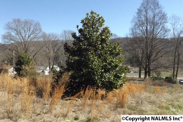 7923 County Road 137, Valley Head, AL - USA (photo 5)