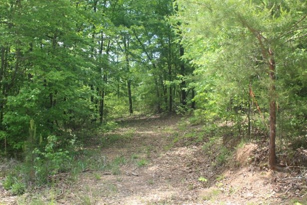 Lot 14 County Road 137, Cedar Bluff, AL - USA (photo 5)