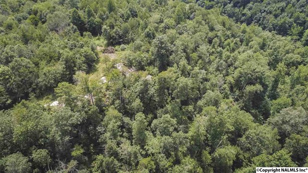 00 County Road 49, Section, AL - USA (photo 5)