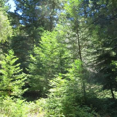 200 Mckenzie Creek, Scotts Valley, CA - USA (photo 4)