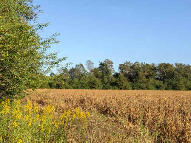 Land - Loxley, AL (photo 3)