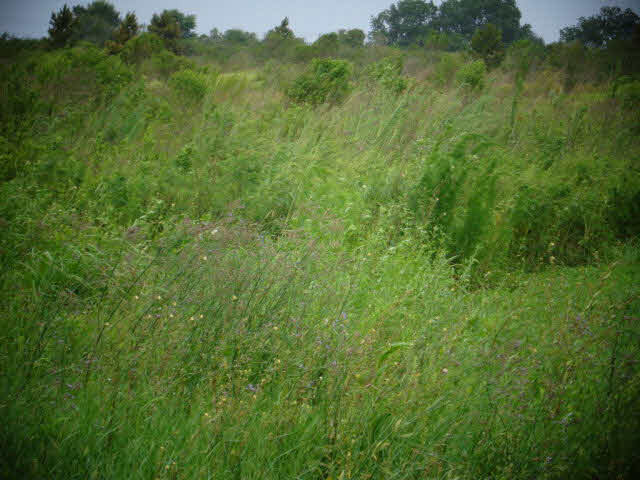 Residential Lots - Foley, AL (photo 2)