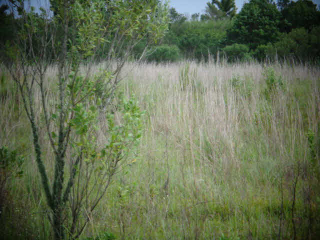 Residential Lots - Foley, AL (photo 3)
