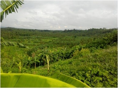 Lot 8 Block 2,paradise Valley Farmlot Subdivision,, Calauan - PHL (photo 1)