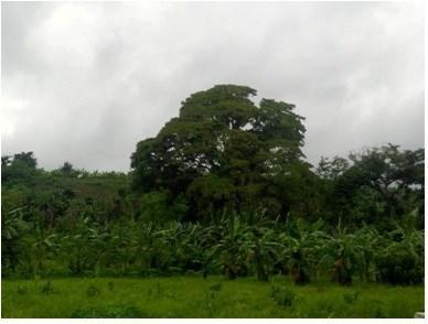 Lot 9 Block 2,paradise Valley Farmlot Subdivision,, Calauan - PHL (photo 1)