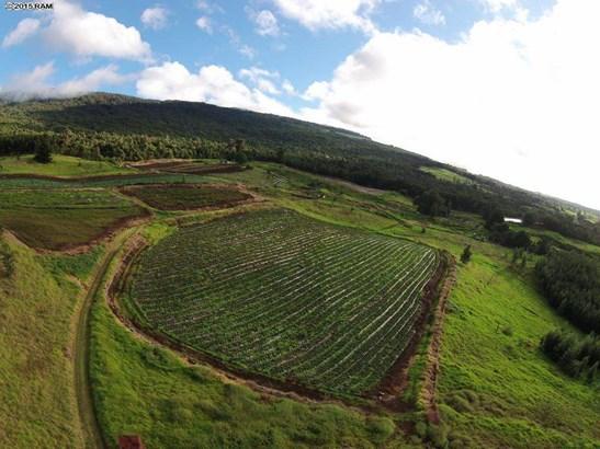 Vacant Land - Kula, HI (photo 4)