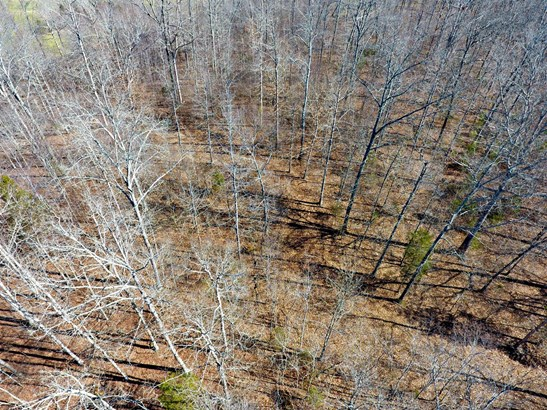 Residential Lot - Fairview, TN (photo 3)