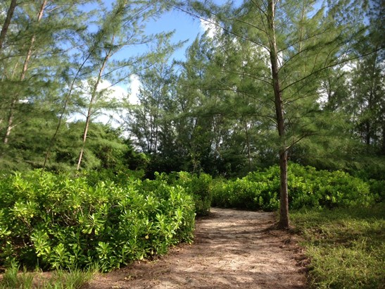 THE BEACH GROVES AT PEASE BAY (photo 4)