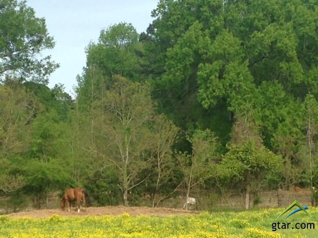 Rural Acreage - Naples, TX (photo 1)