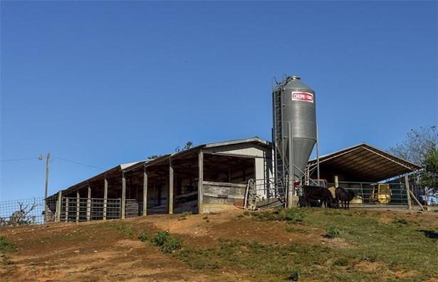 Cattle - Muldrow, OK (photo 5)