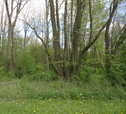 0 Chester Estates Drive Lot #129, Chesterville, OH - USA (photo 3)