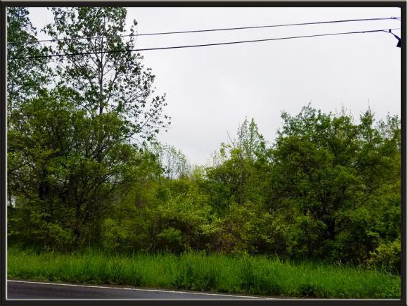 0 Caswell, Dryden, NY - USA (photo 4)