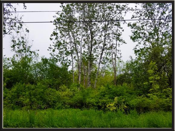 0 Caswell, Dryden, NY - USA (photo 5)