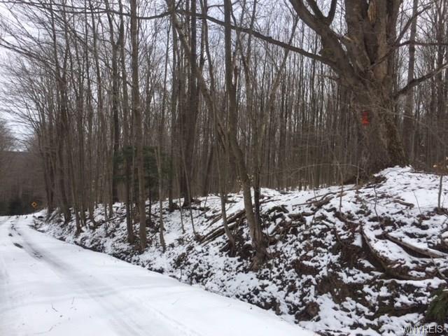 Vl Murray Hill Road, Colden, NY - USA (photo 4)