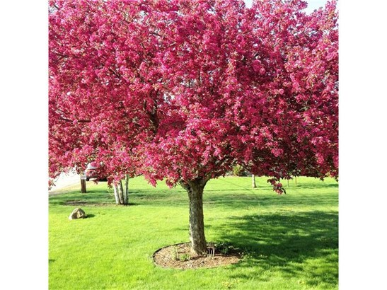 608 S Spring, Blairsville, PA - USA (photo 3)