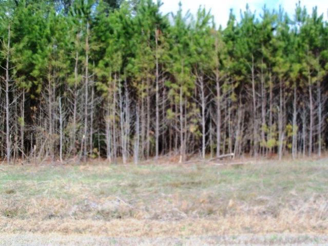 2 Acres Maryland Lane, Corapeake, NC - USA (photo 1)