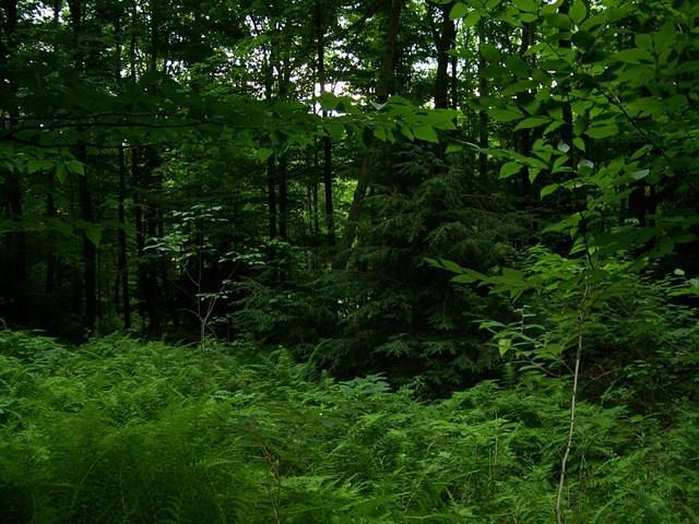 7171 County Rt. 333 Lot B, Campbell, NY - USA (photo 1)
