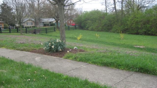 1296 Cape Cod Circle, Lexington, KY - USA (photo 3)