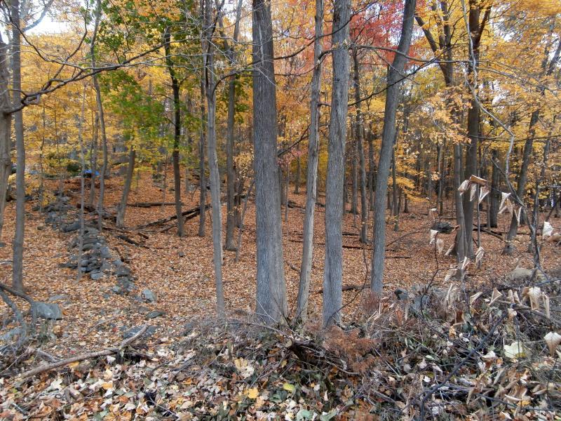 Birch Hill Road, Putnam Valley, NY - USA (photo 2)