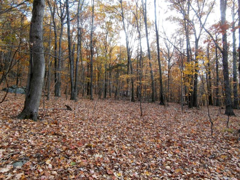 Birch Hill Road, Putnam Valley, NY - USA (photo 4)