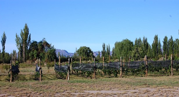 Miraviñas.. Viví Rodeado De Viñedos, Cuadro Benegas - ARG (photo 1)