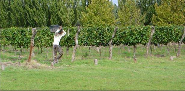 Calitina Wine Resort, Las Paredes - ARG (photo 4)