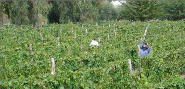 Calitina Wine Resort, Las Paredes - ARG (photo 5)
