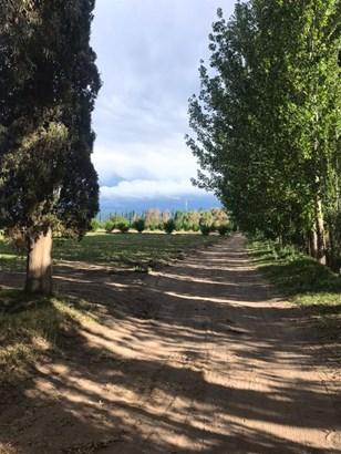 Finca En Gral Alvear , Carmensa - ARG (photo 5)