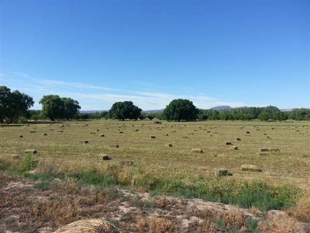 Adelaida El Encuentro - Finca Los Alamos 0, San Rafael - ARG (photo 1)
