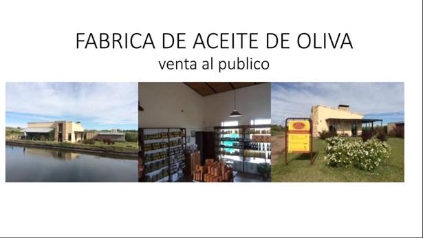 Finca Con Fábrica De Aceite, Cuadro Benegas - ARG (photo 2)