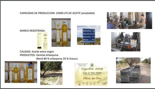 Finca Con Fábrica De Aceite, Cuadro Benegas - ARG (photo 3)