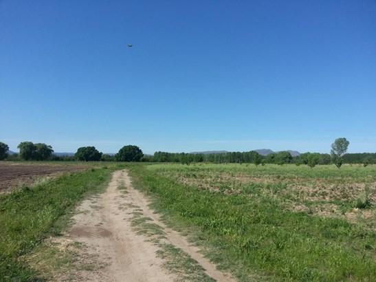 Finca El Encuentro, San Rafael - ARG (photo 3)