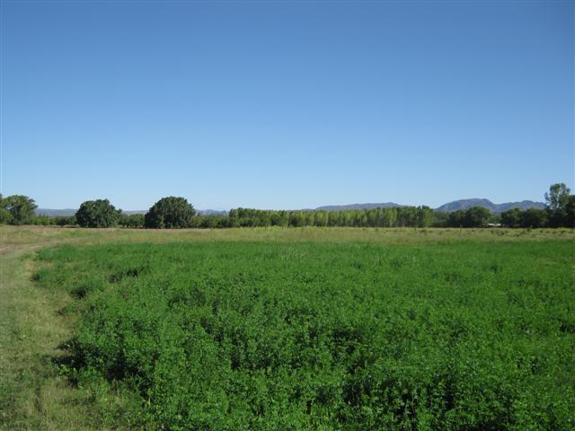 Adelaida - El Encuentro - Finca De Las Sierras 0, San Rafael - ARG (photo 5)