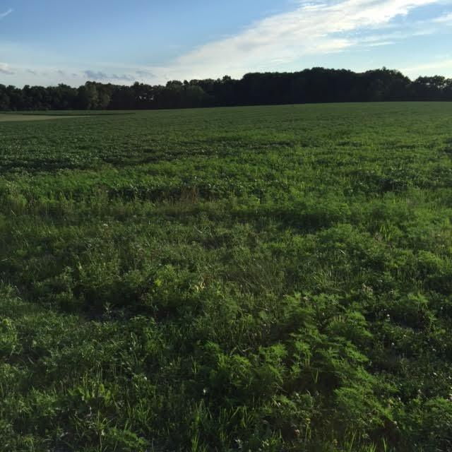 Vacant Land/Acreage - Hebron, IN (photo 1)