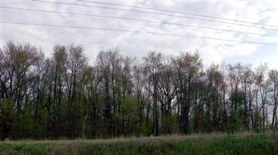Vacant Land/Acreage - Hebron, IN (photo 4)