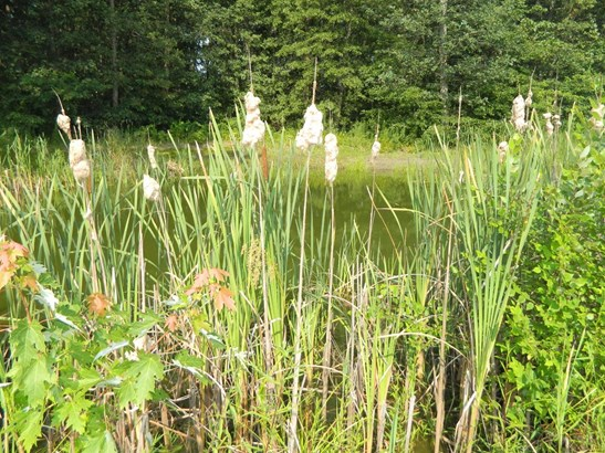 Ranch/1 Sty/Bungalow, Single Family Detach - Wheatfield, IN (photo 4)