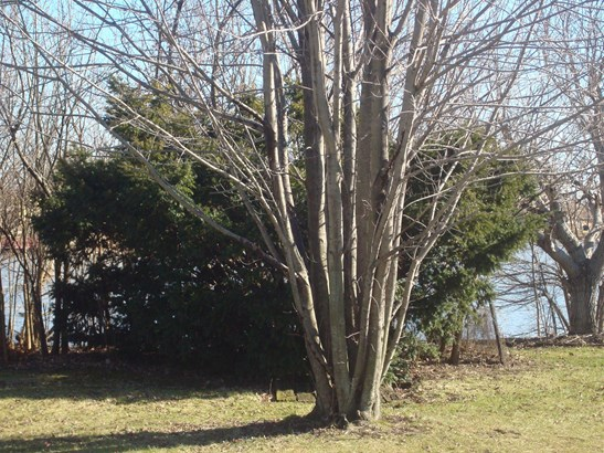 Land - LYNWOOD, IL (photo 4)