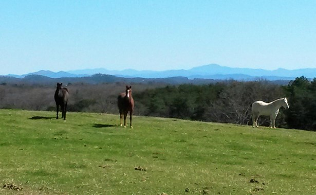 Rural,Single Family - Lenoir City, TN (photo 1)