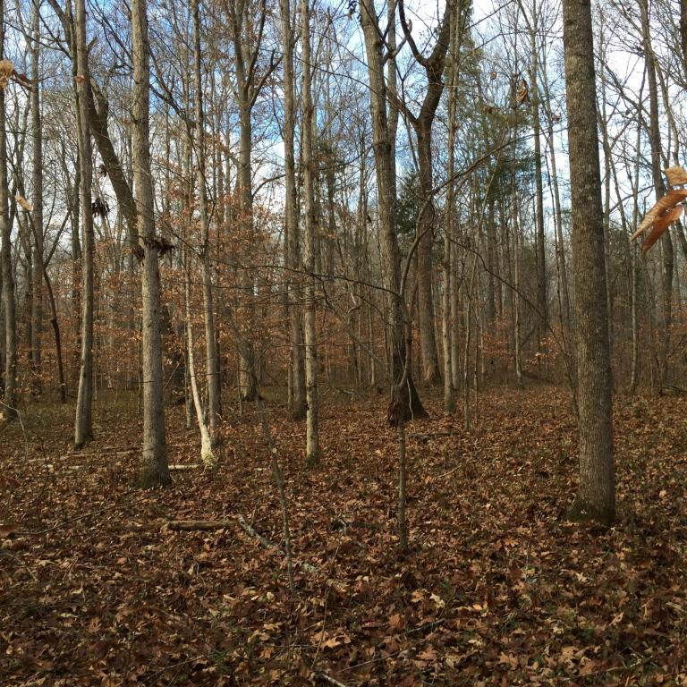 Recreational,Rural,Single Family - Lenoir City, TN (photo 3)
