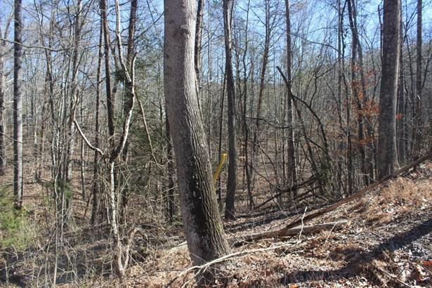 Rural,Single Family - Caryville, TN (photo 3)