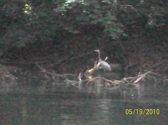 Lake Front,Rural,Single Family - Washburn, TN (photo 2)