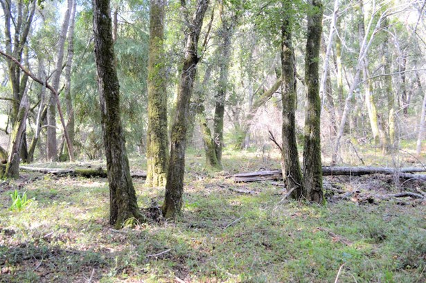 Residential Lots & Land - WATSONVILLE, CA (photo 4)
