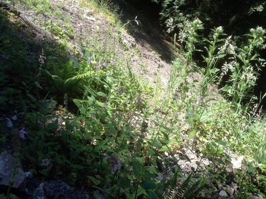 Residential Lots & Land - SCOTTS VALLEY, CA (photo 4)